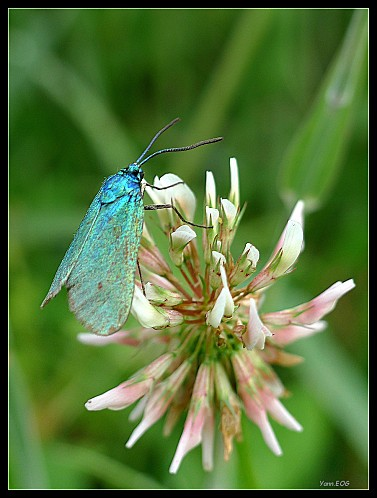 Zyg-ne-turquoise-10.jpg
