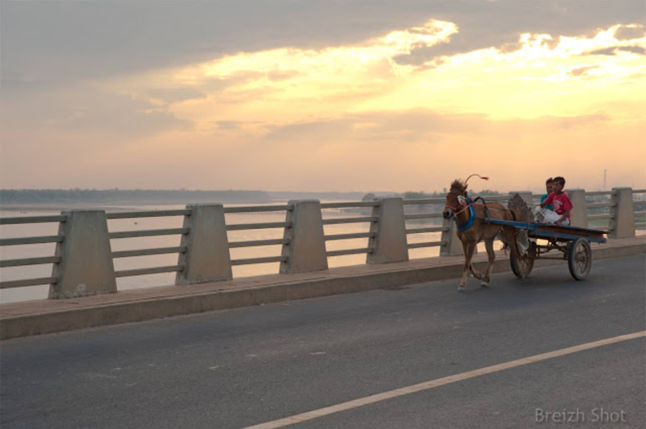 Petits chevaux cambodgiens - Pont Kizuna - Kampong Cham