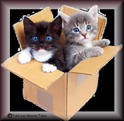 Tube chats - chatons 2983