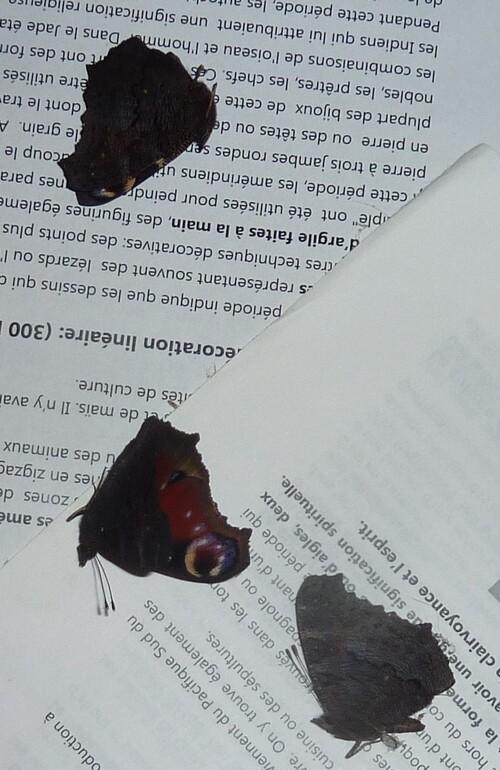 Papillons en hibernation
