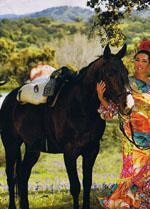 cheval andalou