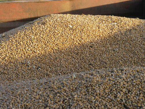 Tas de grains
