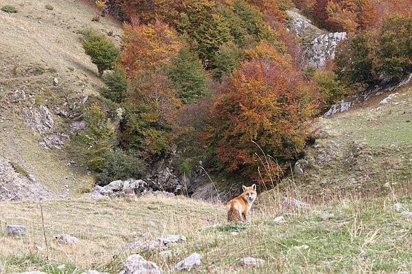 vallée d'ossau11