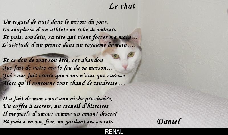 Les Chats En Poesie Le Monde De La Philo Et De La Poésie