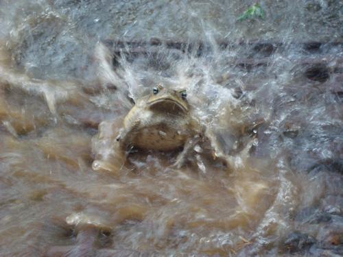 crapaud sous la douche
