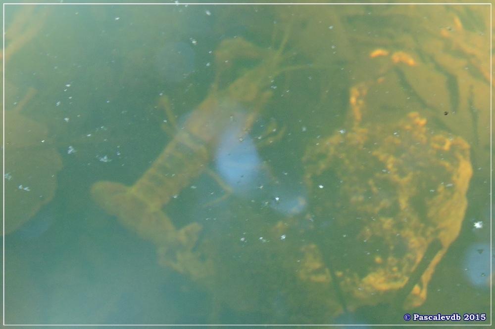 Les étangs de Monsalut - Début Août 2015 - 4/7