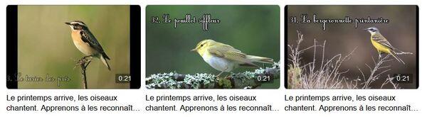 Les oiseaux de la forêt et leurs chants, présentés magnifiquement par la Maison de la Forêt....