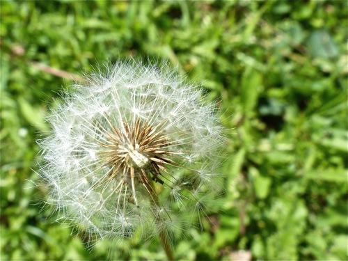 Écho floral :