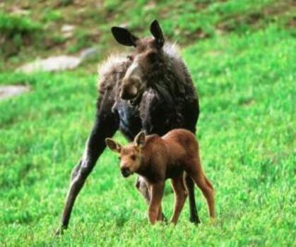 http://lancien.cowblog.fr/images/Animaux2/gnous-copie-1.jpg