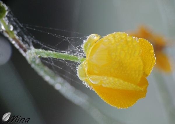 Un réveil dans le jaune...