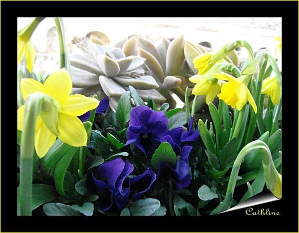 jardiniere-de-printemps-2.jpg