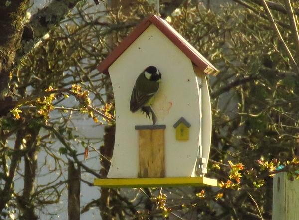 Les derniers oiseaux qui ont fréquenté mon jardin.....