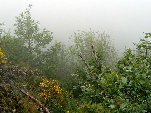 Sur le parcours et dans le brouillard