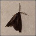 Galerie LEPIDOPTERES - HETEROCERES - Papillons de Nuit.