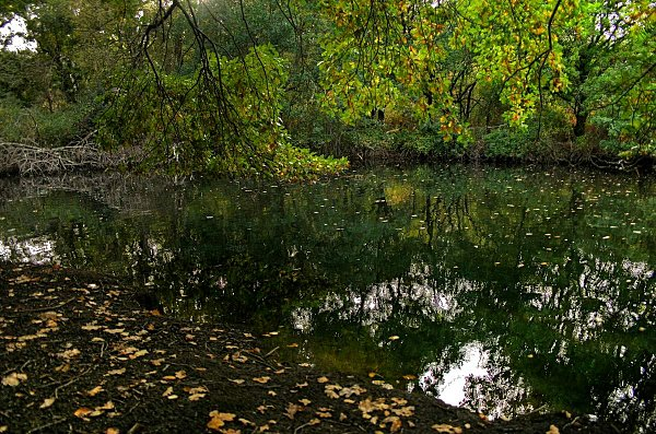 Bassin-d-Arcachon 0315 4 3