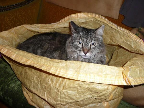 chat et sac 3
