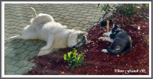 Les p'tits loups font la sieste (6 janvier 2016)