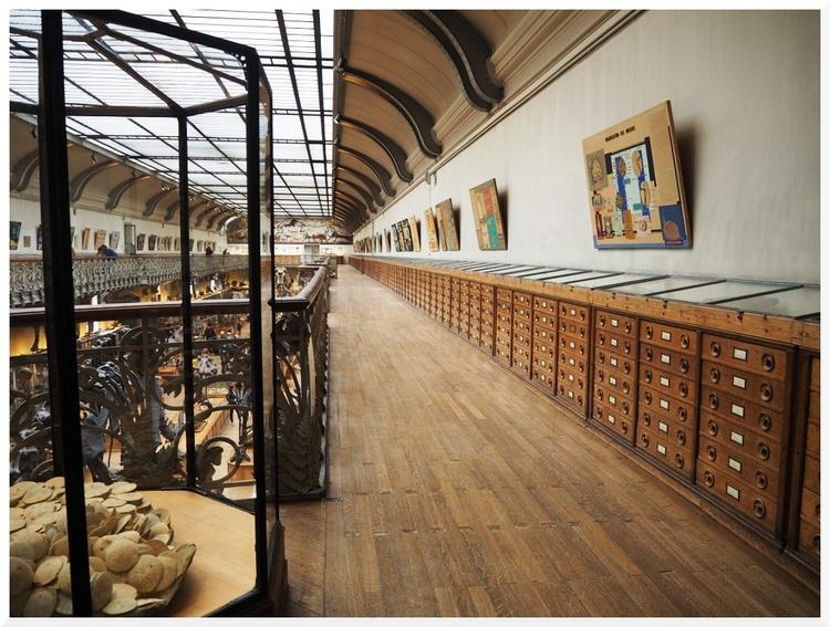 Galeries D'Anatomie comparée et de Paléontologie (2)
