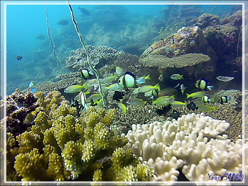 Aquarium - Nosy Tsarabanjina - Nosy Mitsio - Madagascar