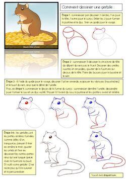 Dessin dirigé : dessine une gerbille