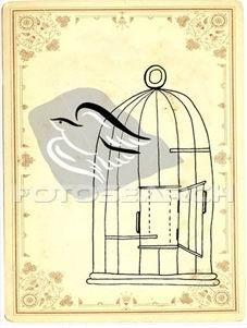 oiseau-voler-dehors ~car0046