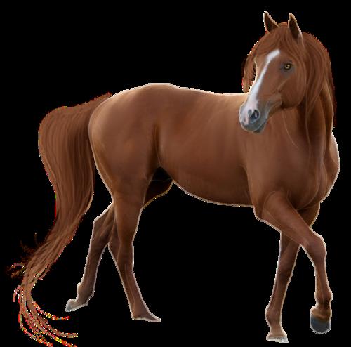 Tubes Animalerie (2014) - Thème Les chevaux série 02