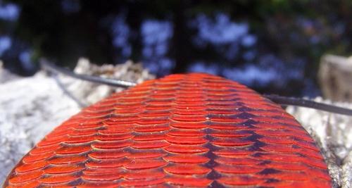 Collier en écailles de serpent de couleur rouge
