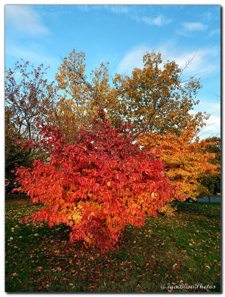 2015-10-27-ARBRE-OCTOBRE-12.jpg