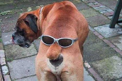 chien lol
