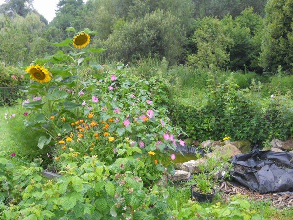 Nouvelle passion. Le jardinage