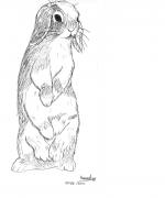 Pouna dessiné par Hannah et quelques nouvelles d'Arles