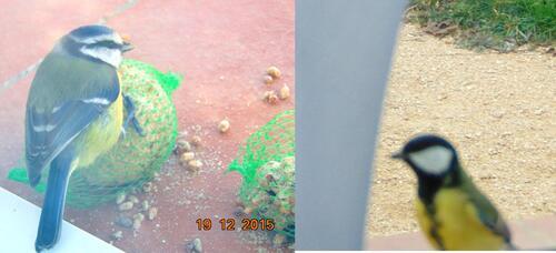 Chaumines et boules de plumes, bloc 11 (à faire)