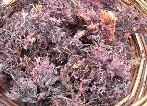 Vertus médicinales des plantes sauvages : Carragaheen