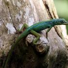 Sur un arbre -Photo : Edgar