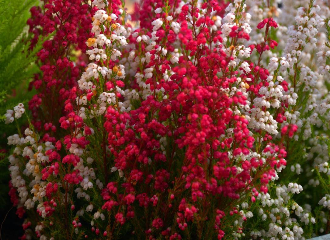 J'aime ces fleurs