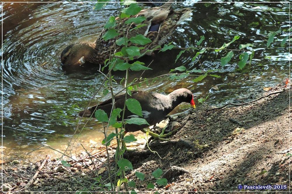 Réserve ornitho du Teich - Mi juillet 2015 - 2/7