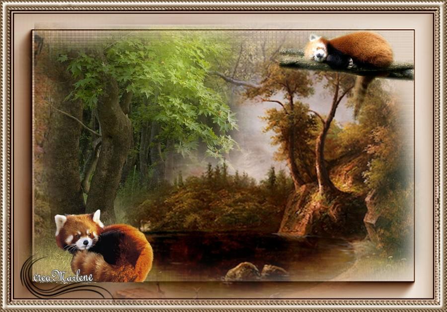 ♥ Le panda roux ♥