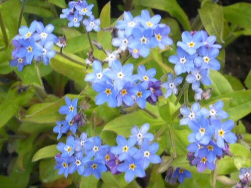 le 6 avril 1960 à 0H40 ... une fleur de printemps naissait ...