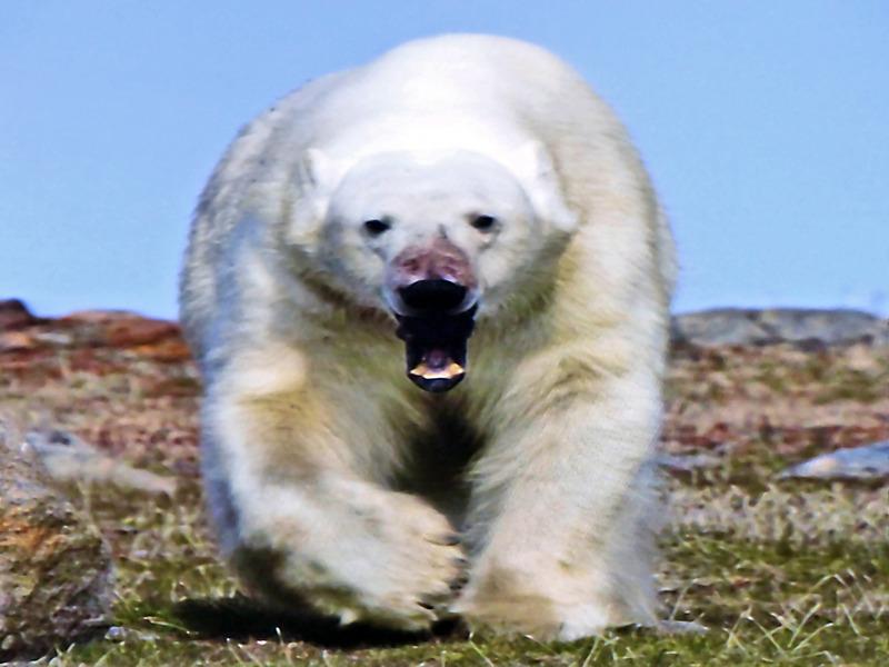 Pendant les formalités douanières, conférence obligatoire sur la sécurité concernant les ours polaires - Pond Inlet - Nunavut - Canada