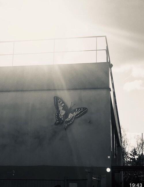 Butterfly by Adam