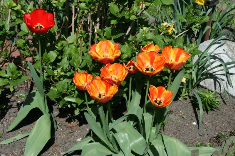 Faunes et flores