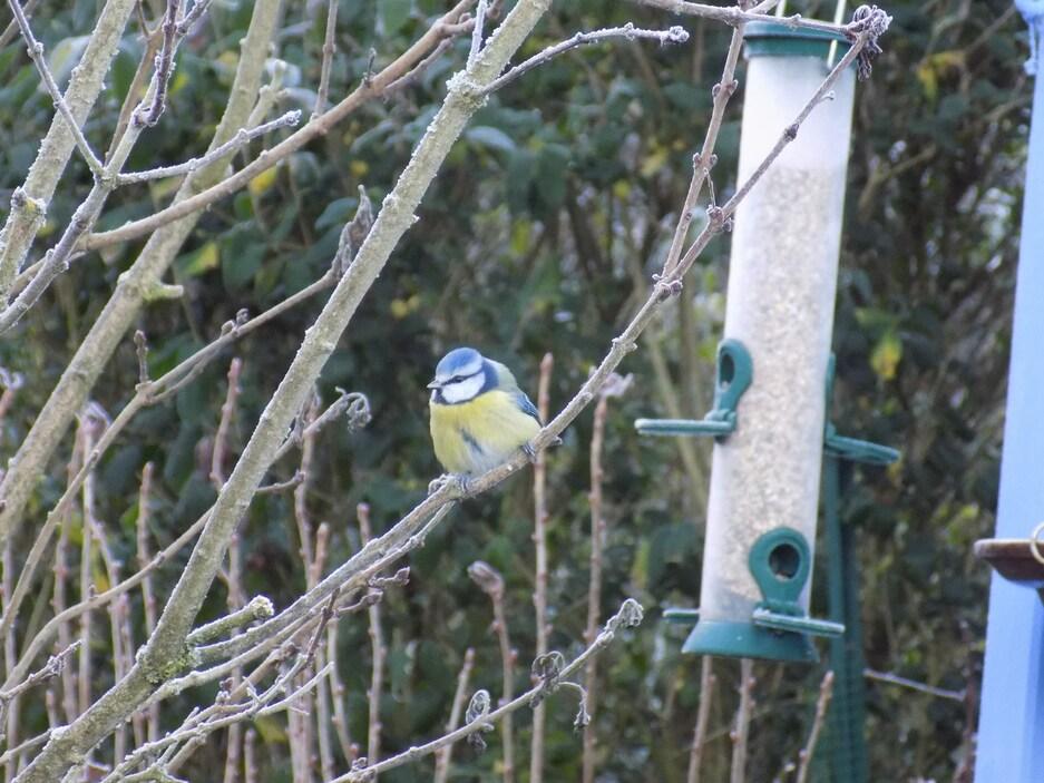 Les oiseaux au jardin et en balade