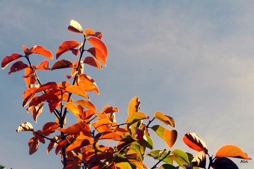 Des branches aux couleurs de l'automne