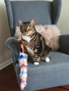 Winston mon chat
