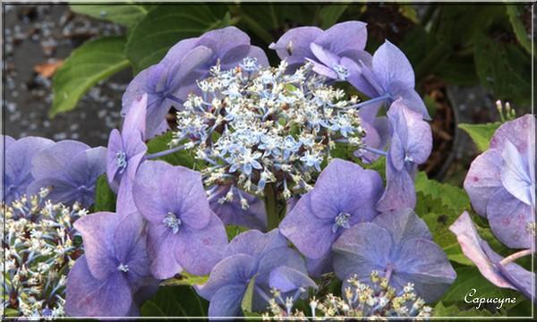 """Les pépinières du val d'Erdre : """"plante bleue"""""""