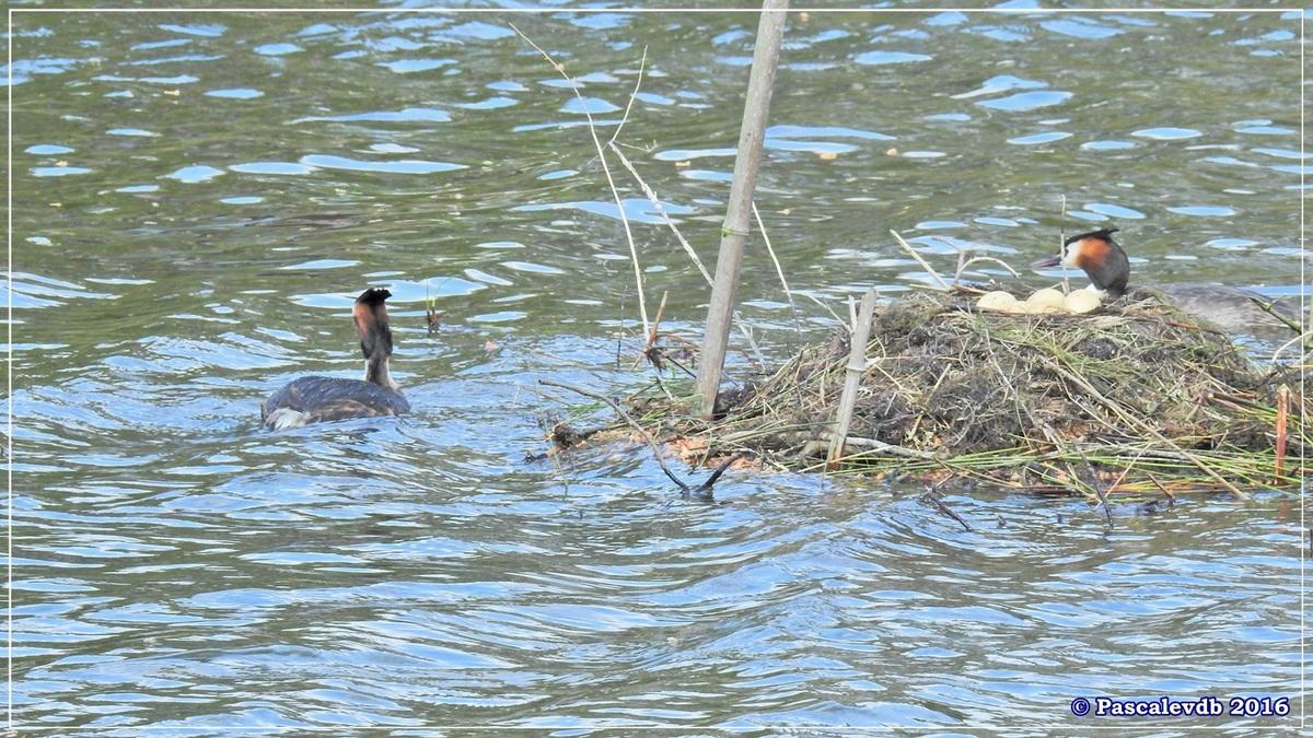 Sur le sentier du littoral au Teich - Avril 2016 - 1/2