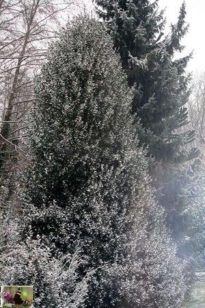 La_neige_002