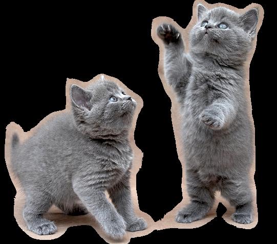 Tubes chats