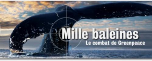 ~ Mille Baleines; Le Combat De Greenpeace ~