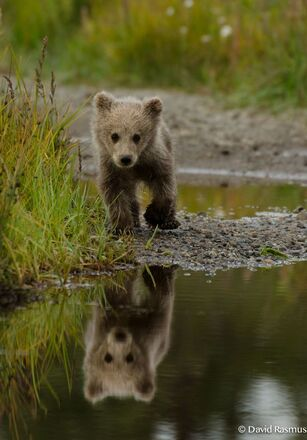 Ours brun #cute #ours #brun: